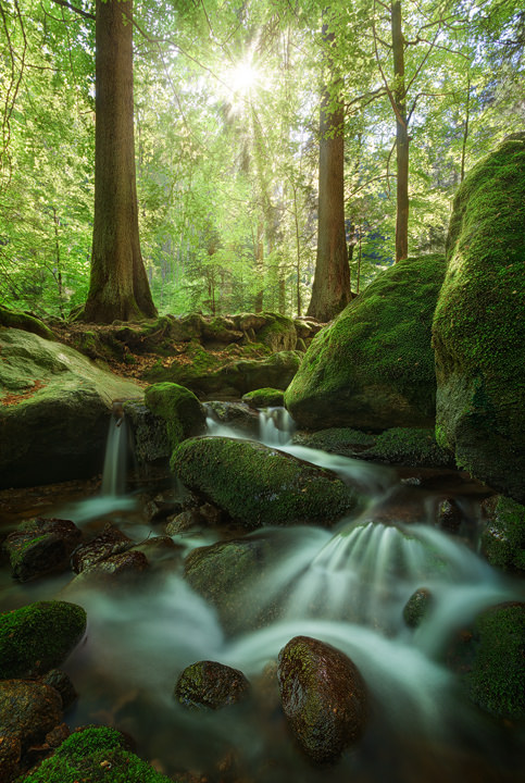 A little stream winds it's way through boulders in a green forest