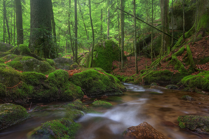A little river winds it's way through a dark, green forest