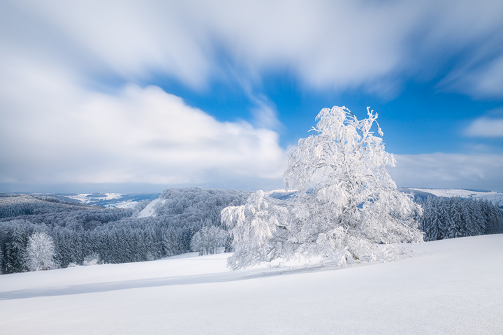 A lonely tree covered in Snow