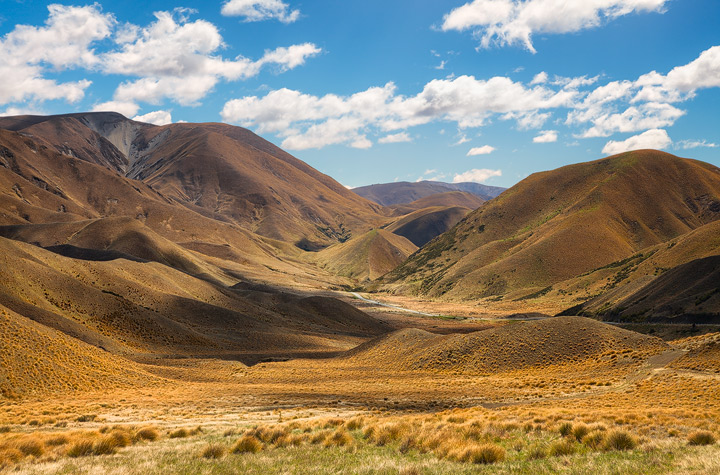 The golden grasses of Lindis Pass