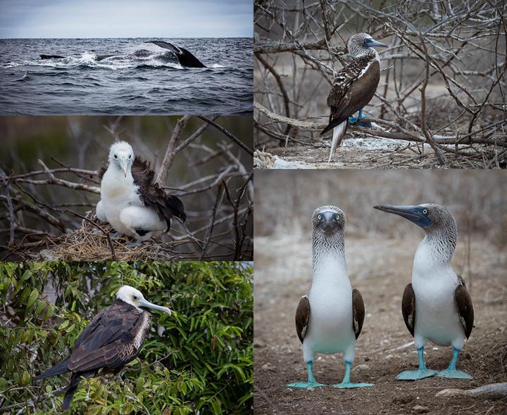 Selection of bird portraits taken on Isla de la Plata