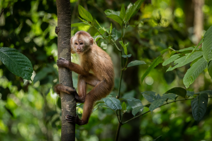 A little monkey climbing trees