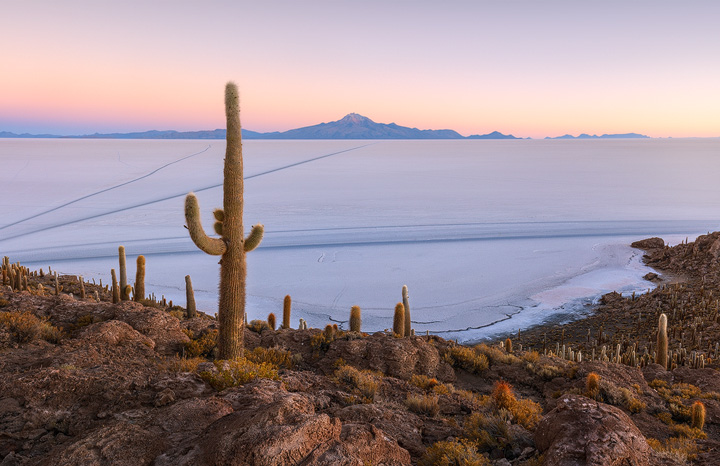 An island full of cacti in the midle of the salt flats