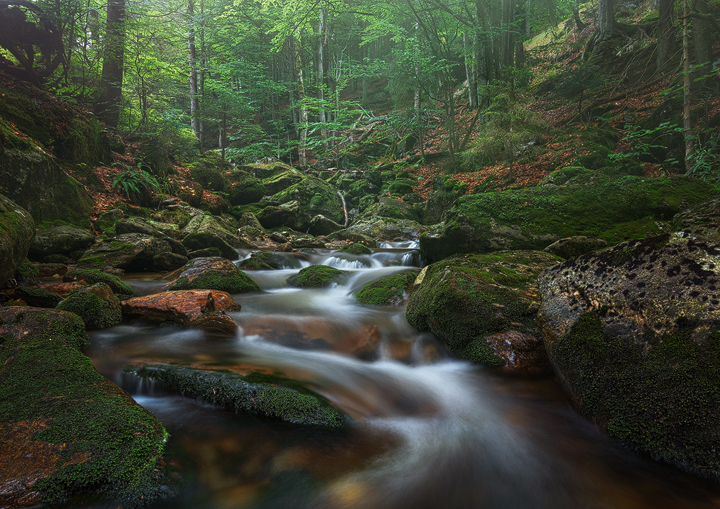 A little stream in the bavarian forest