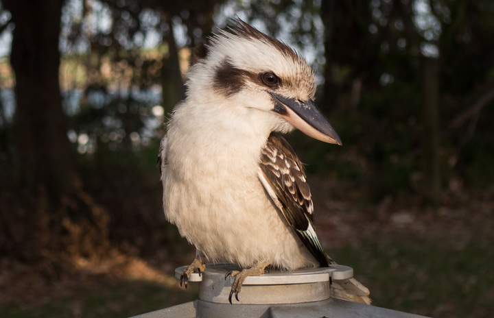 the cutest bird in the world