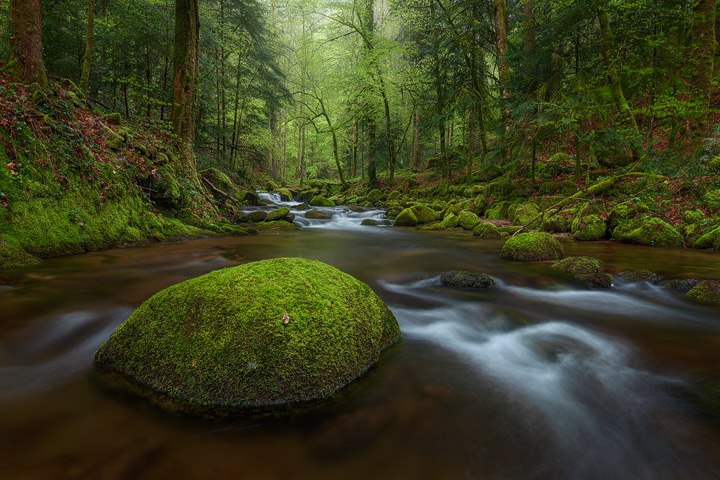The Grobbach in the Black Forest on a rainy day