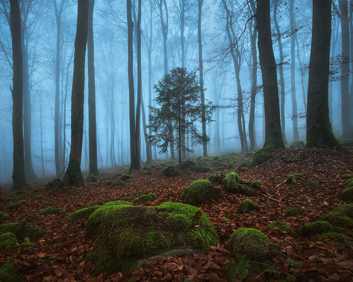 Fog in a local woodland
