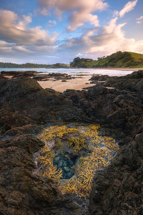 A beautiful tidal pool within the rocks at Daisy Bay