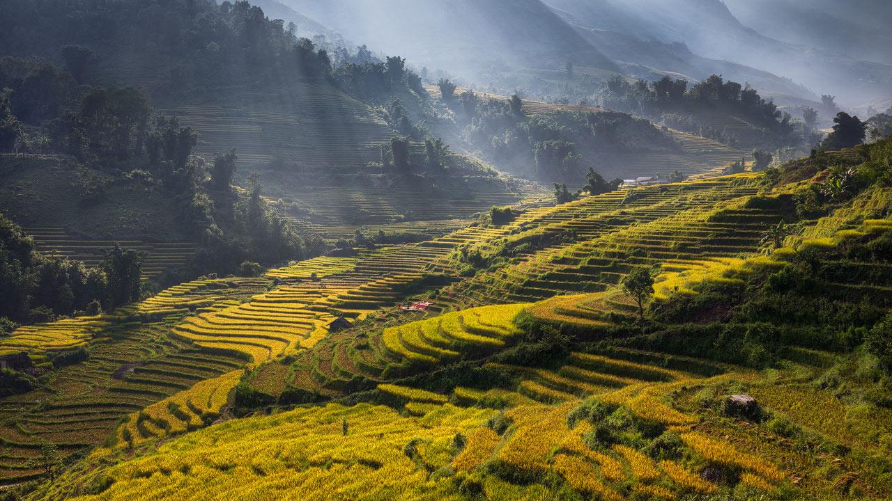 Sapa Landscape Photography during Harvest