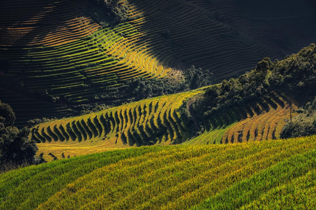 Close up view of the rice fields in northern Vietnam