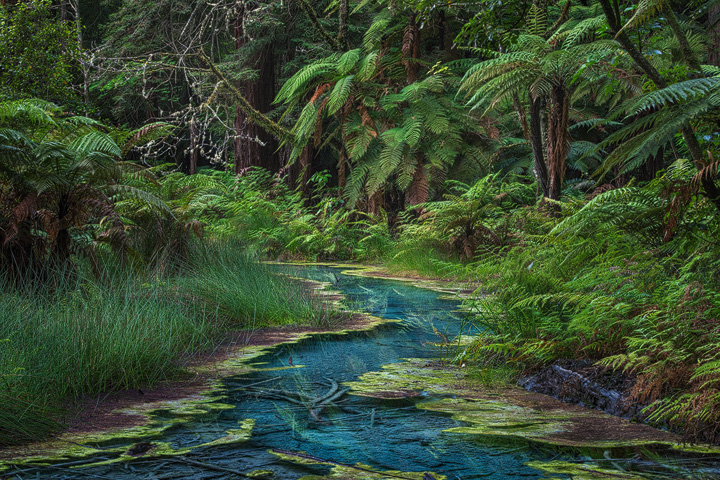 A deep blue pond in the Rotorua Redwoods