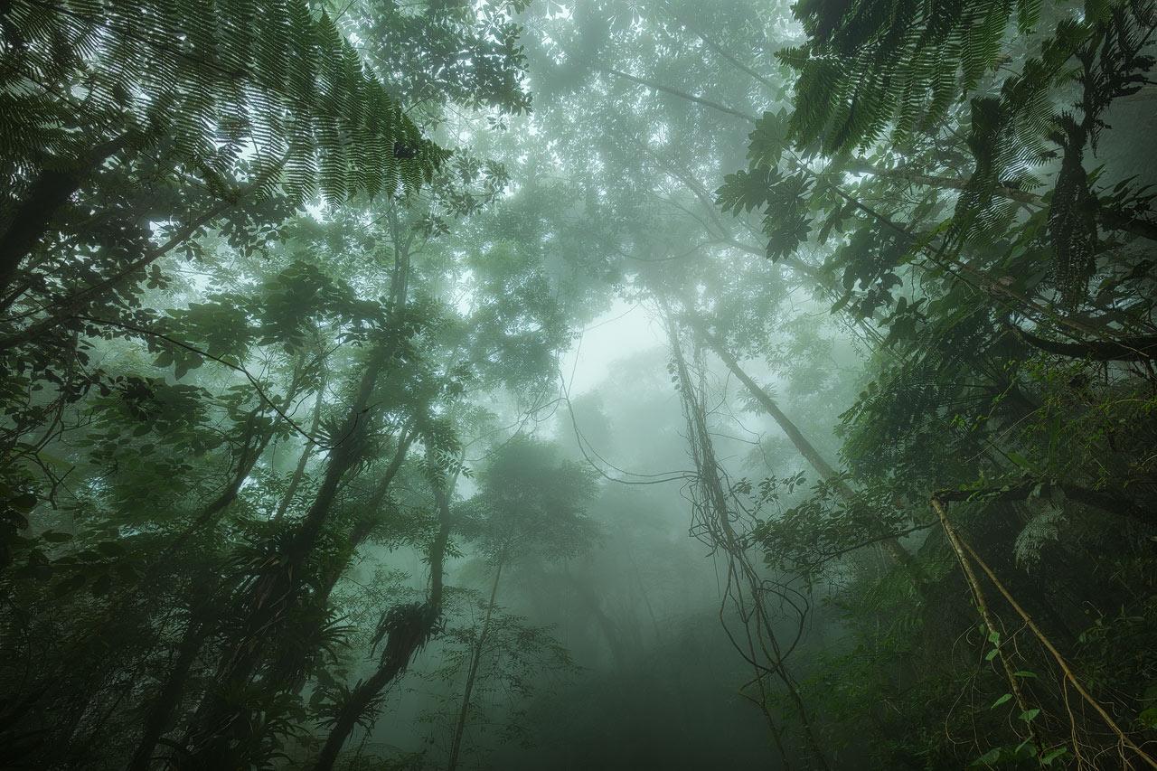 Fog and rain drifting through the forest of San Lorenzo
